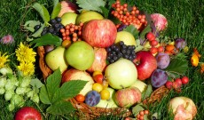 Екологично чистата храна Ушмар, малко позната в наше време е